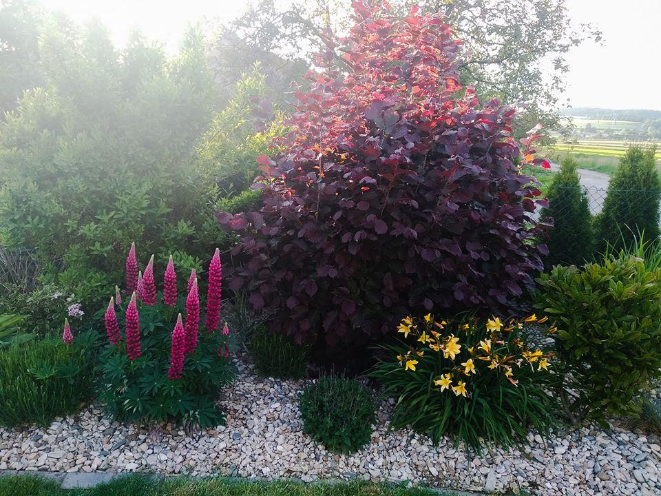 Zahrada - Obrázek č. 77