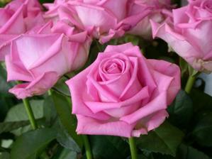 budu mít tyto růže s hortenziemi