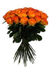 Další krásné růže