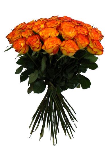 Mé červnové sny - Další krásné růže
