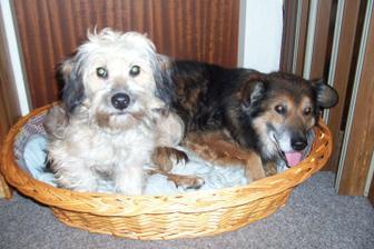 Naši miláčci Amie a Boy x-)