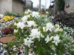 Takhle krásně nám skalka letos na jaře už kvetla