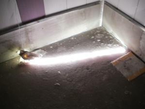 Zkouška světelných listel do sprchového kouta...