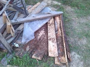 mravce sa prestahovali :-( ako sa ich zbavim