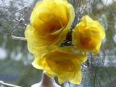 Fascinátor so žltými ružami,