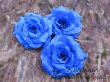 Květ růže tmavě modrý - Obrázek č. 1