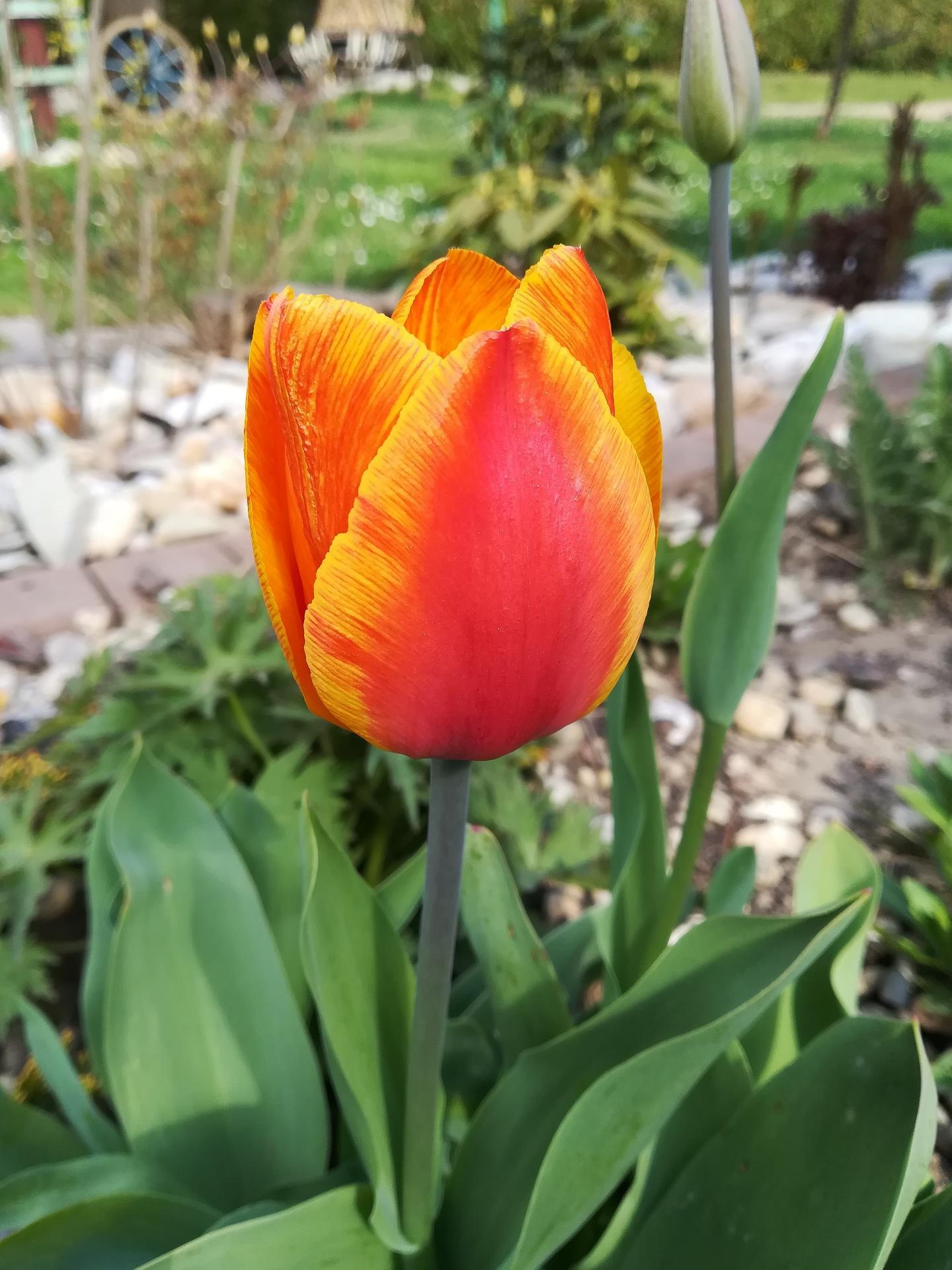 Pozdrav zo záhrady. - Obrázok č. 5