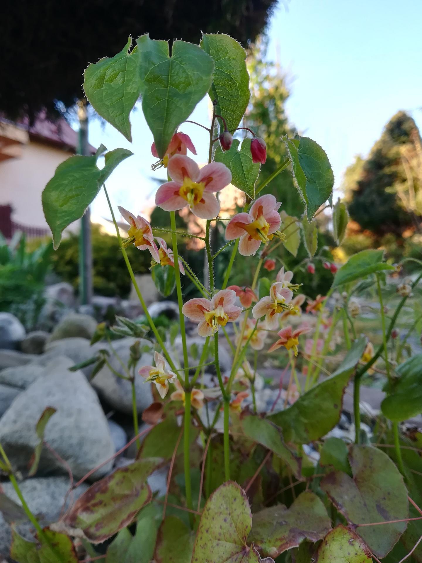 Pozdrav zo záhrady. - Obrázok č. 4