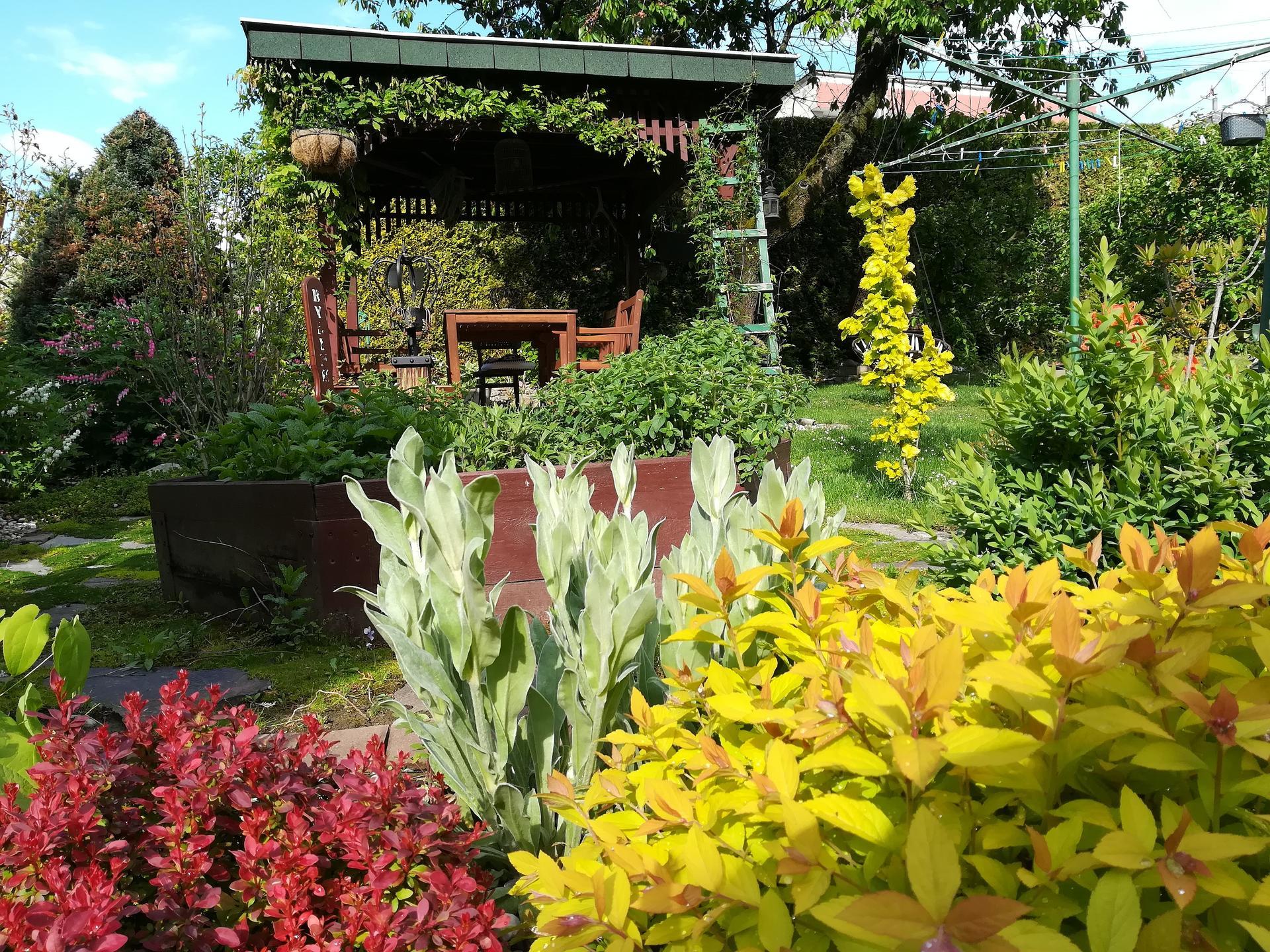 Pozdrav zo záhrady. - Obrázok č. 40