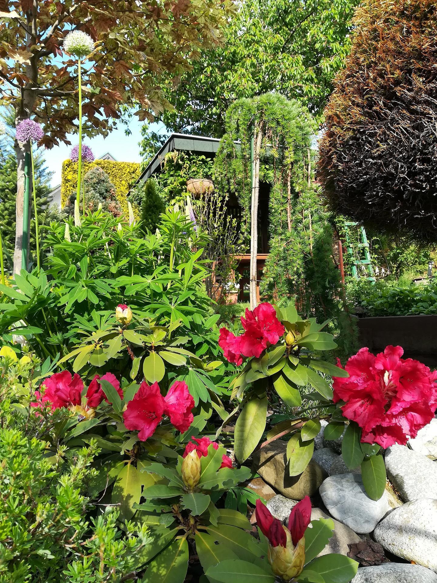 Pozdrav zo záhrady. - Obrázok č. 43