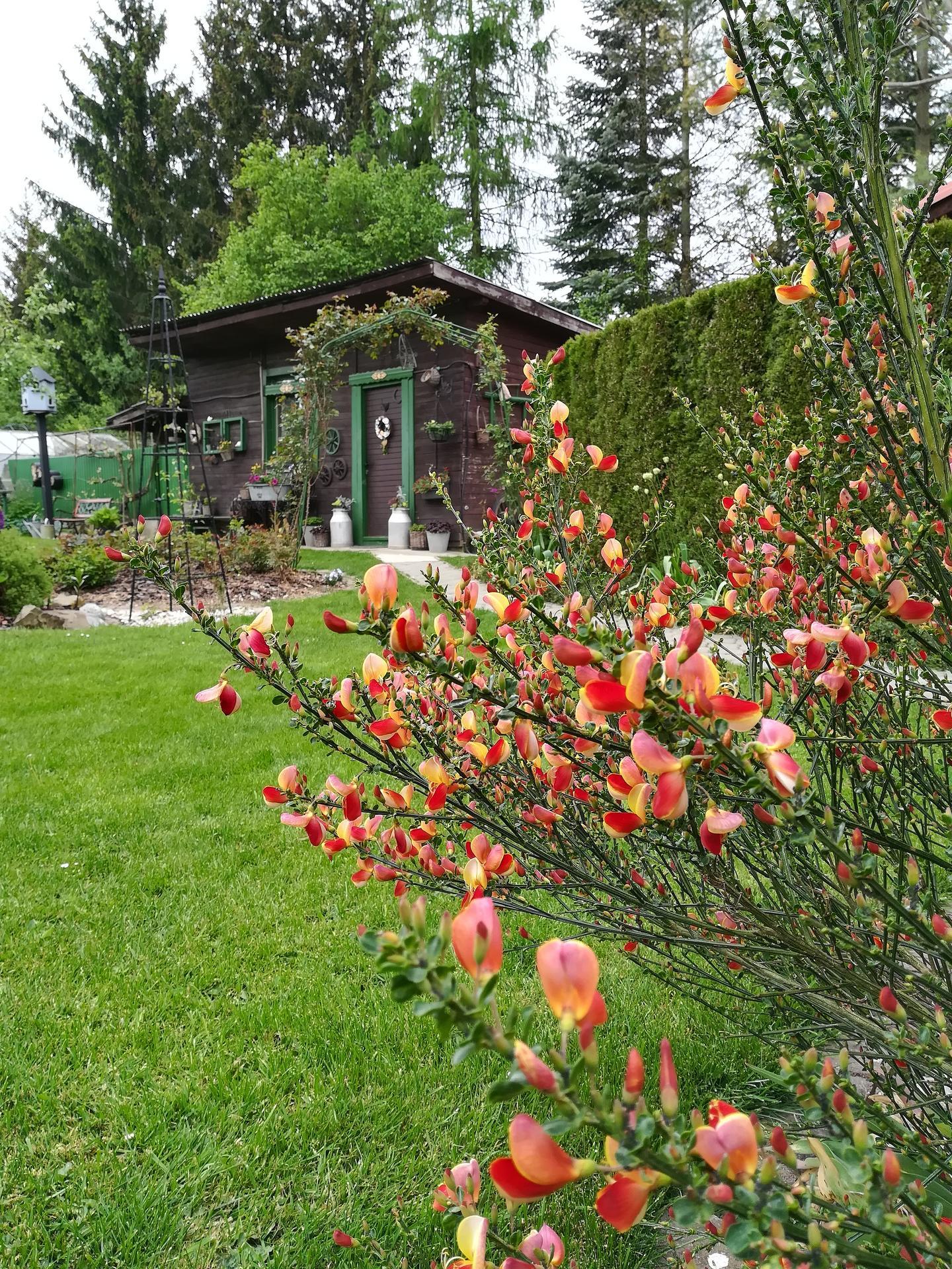 Pozdrav zo záhrady. - Obrázok č. 32
