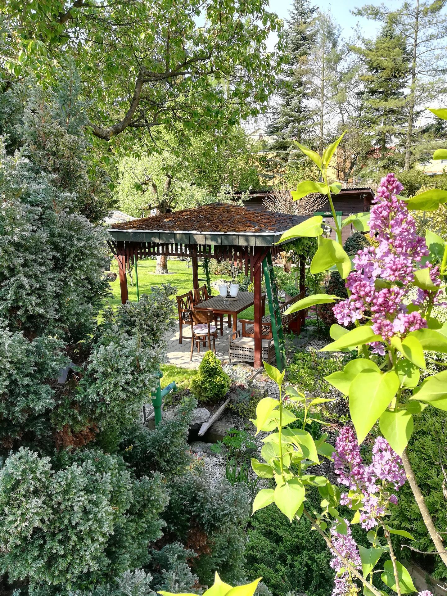 Pozdrav zo záhrady. - Obrázok č. 26