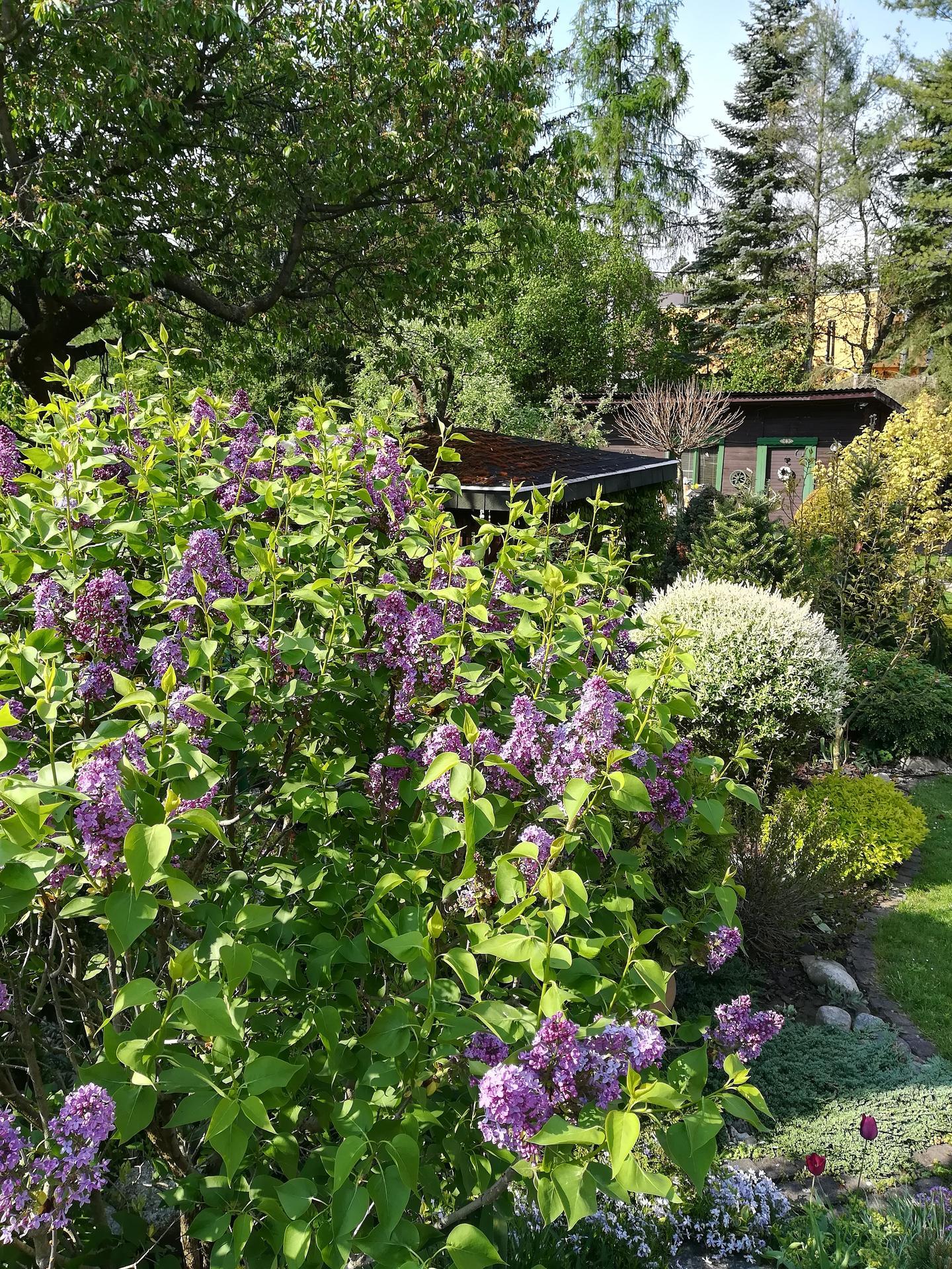 Pozdrav zo záhrady. - Obrázok č. 25
