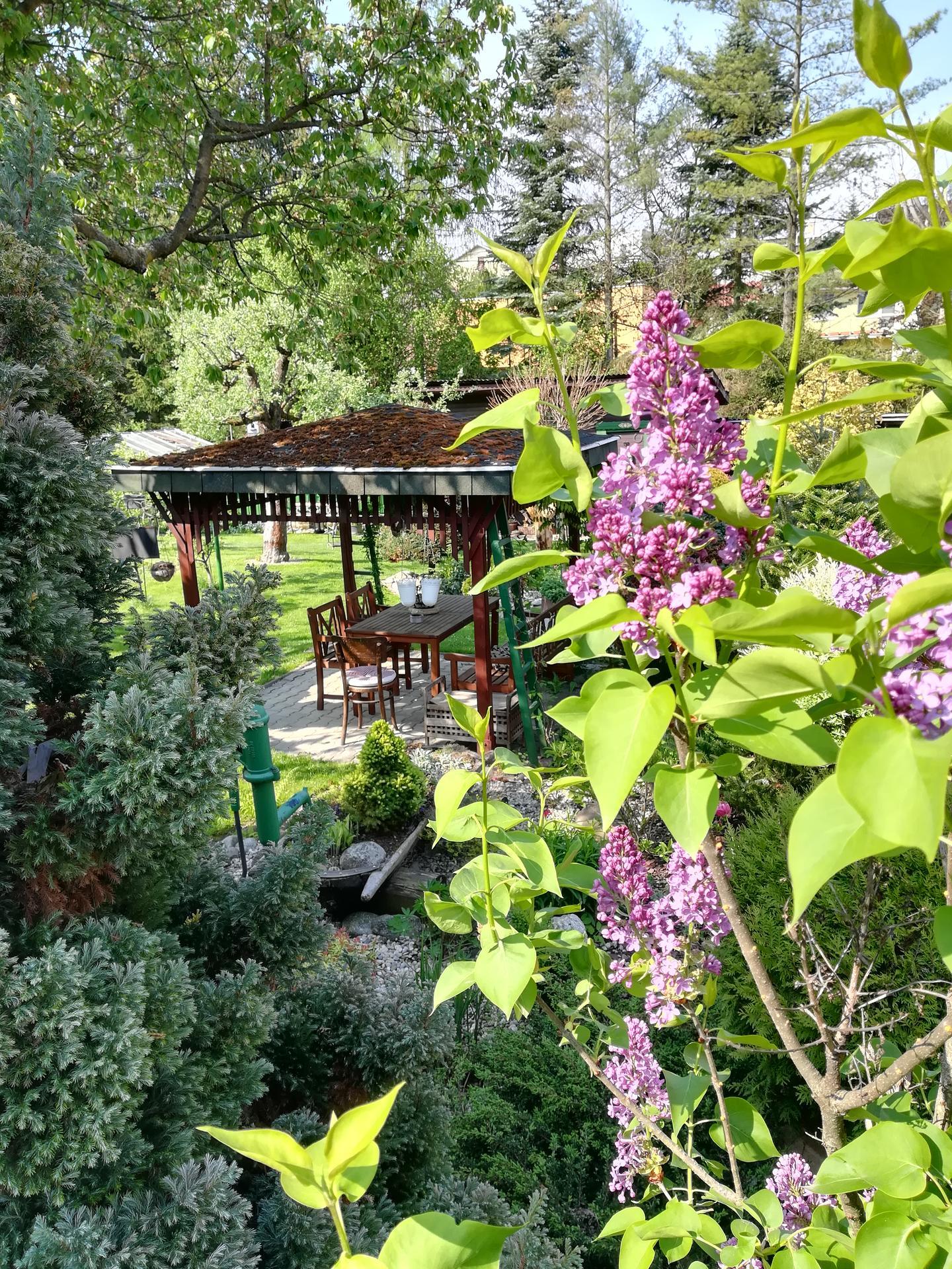 Pozdrav zo záhrady. - Obrázok č. 52