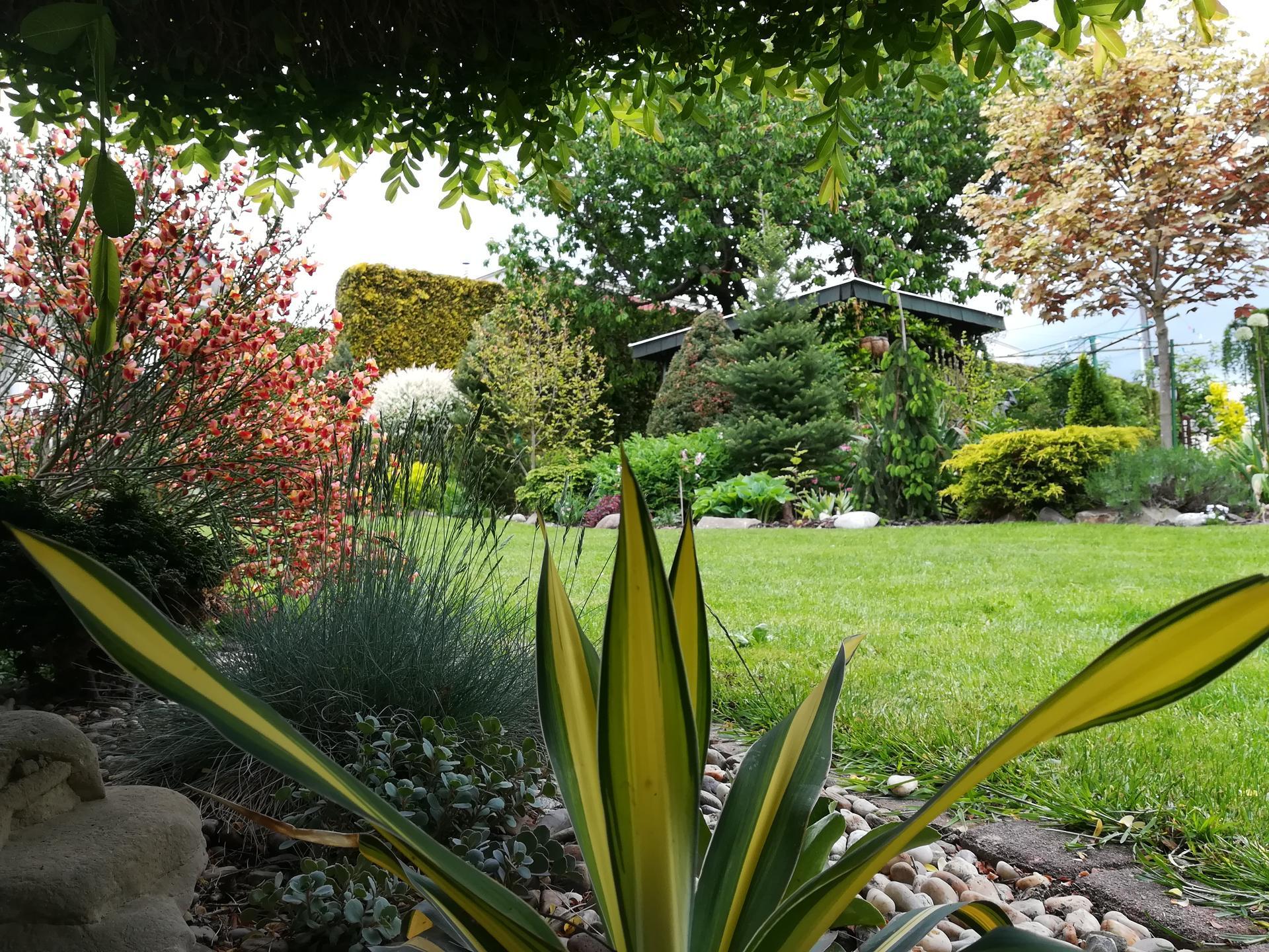 Pozdrav zo záhrady. - Obrázok č. 57