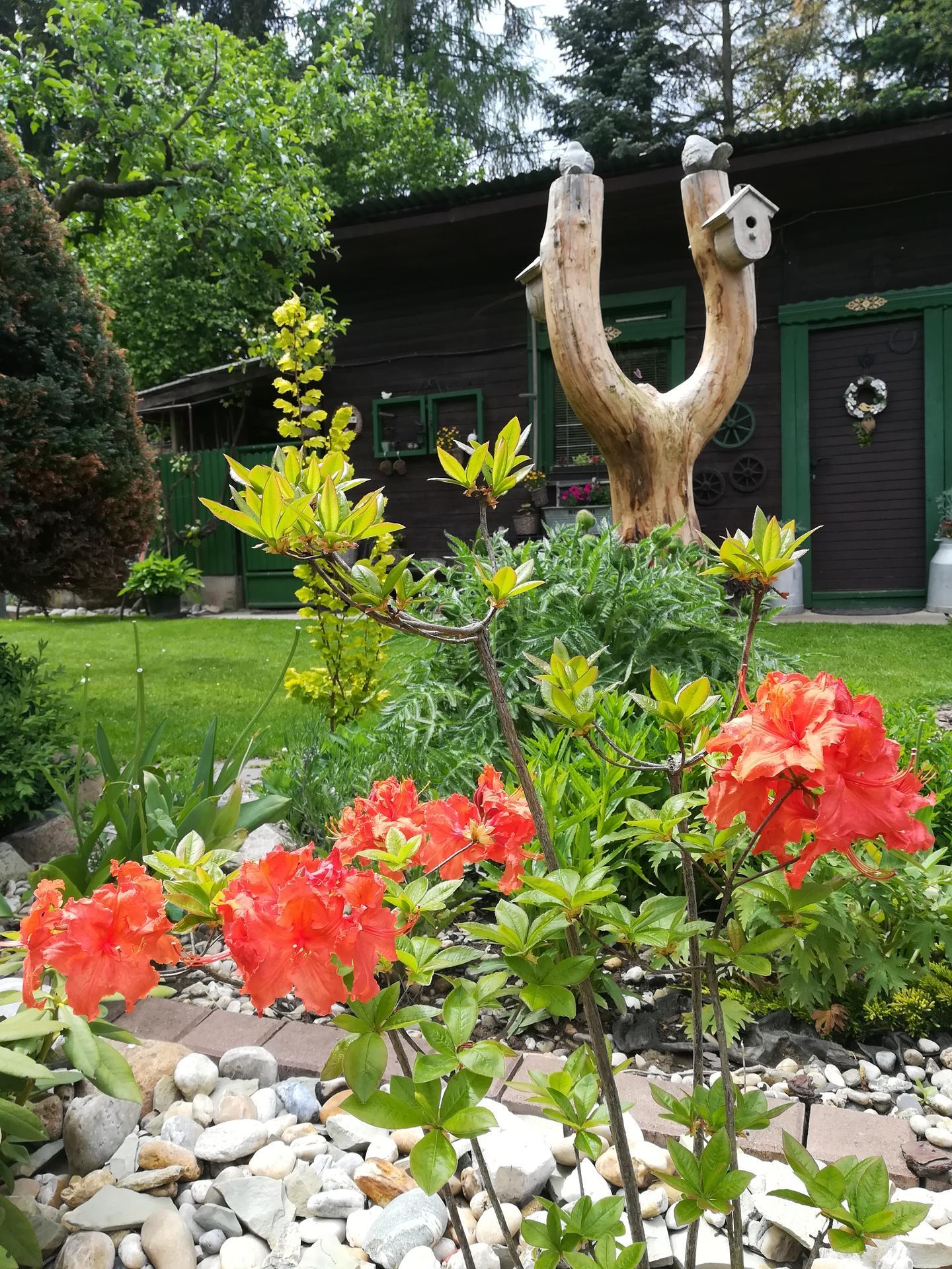 Pozdrav zo záhrady. - Obrázok č. 59