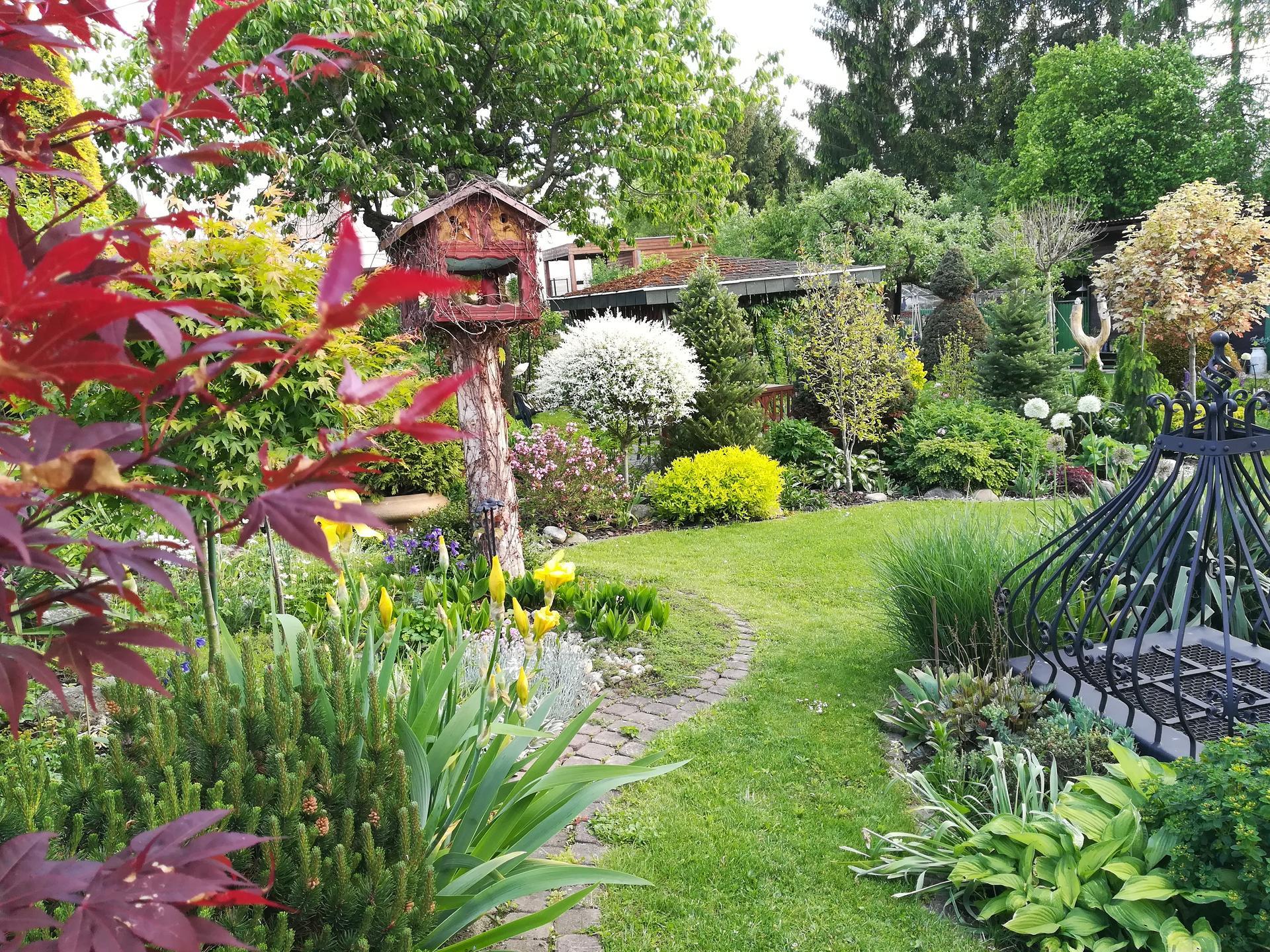 Pozdrav zo záhrady. - Obrázok č. 61