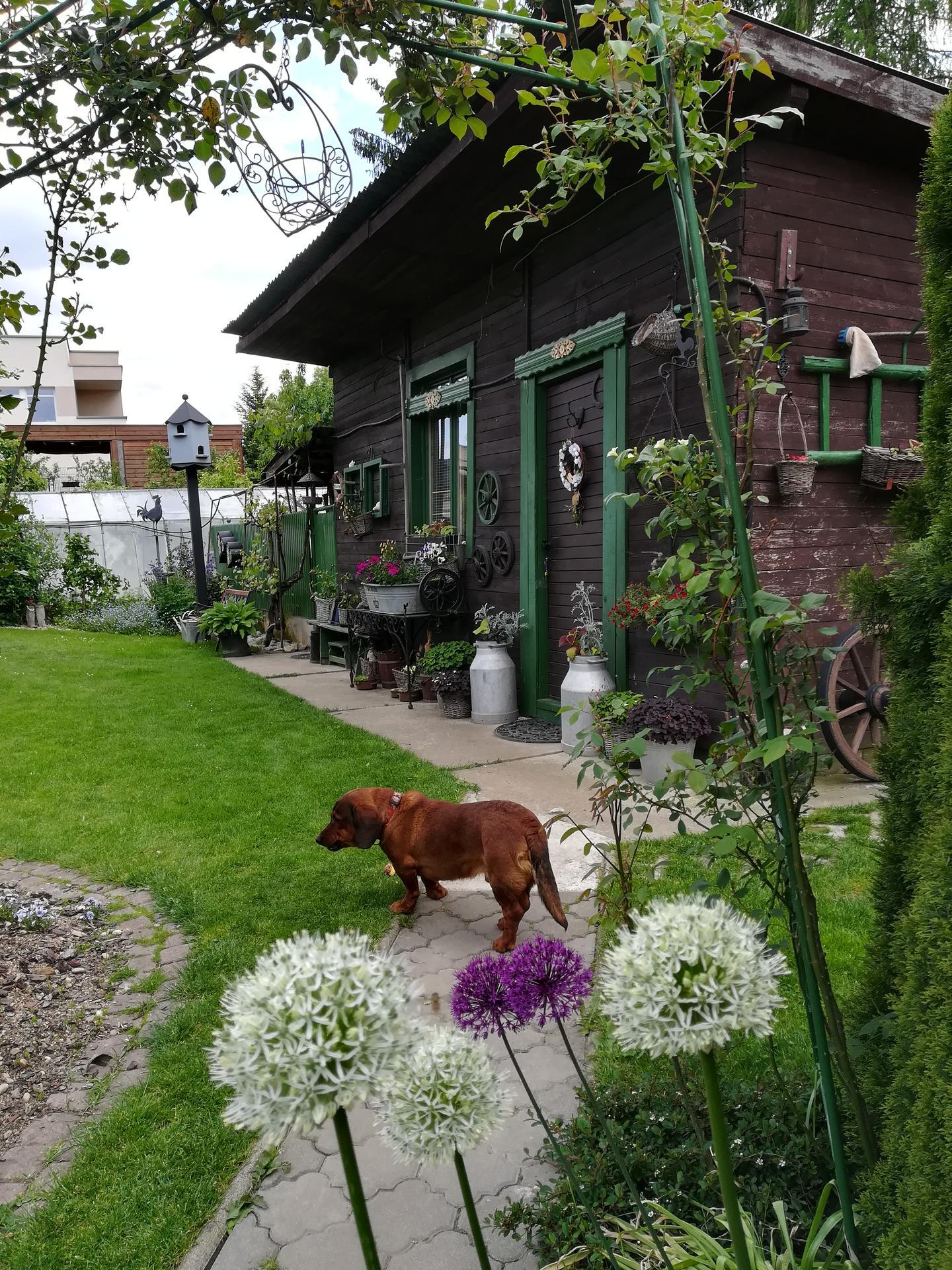 Pozdrav zo záhrady. - Obrázok č. 65