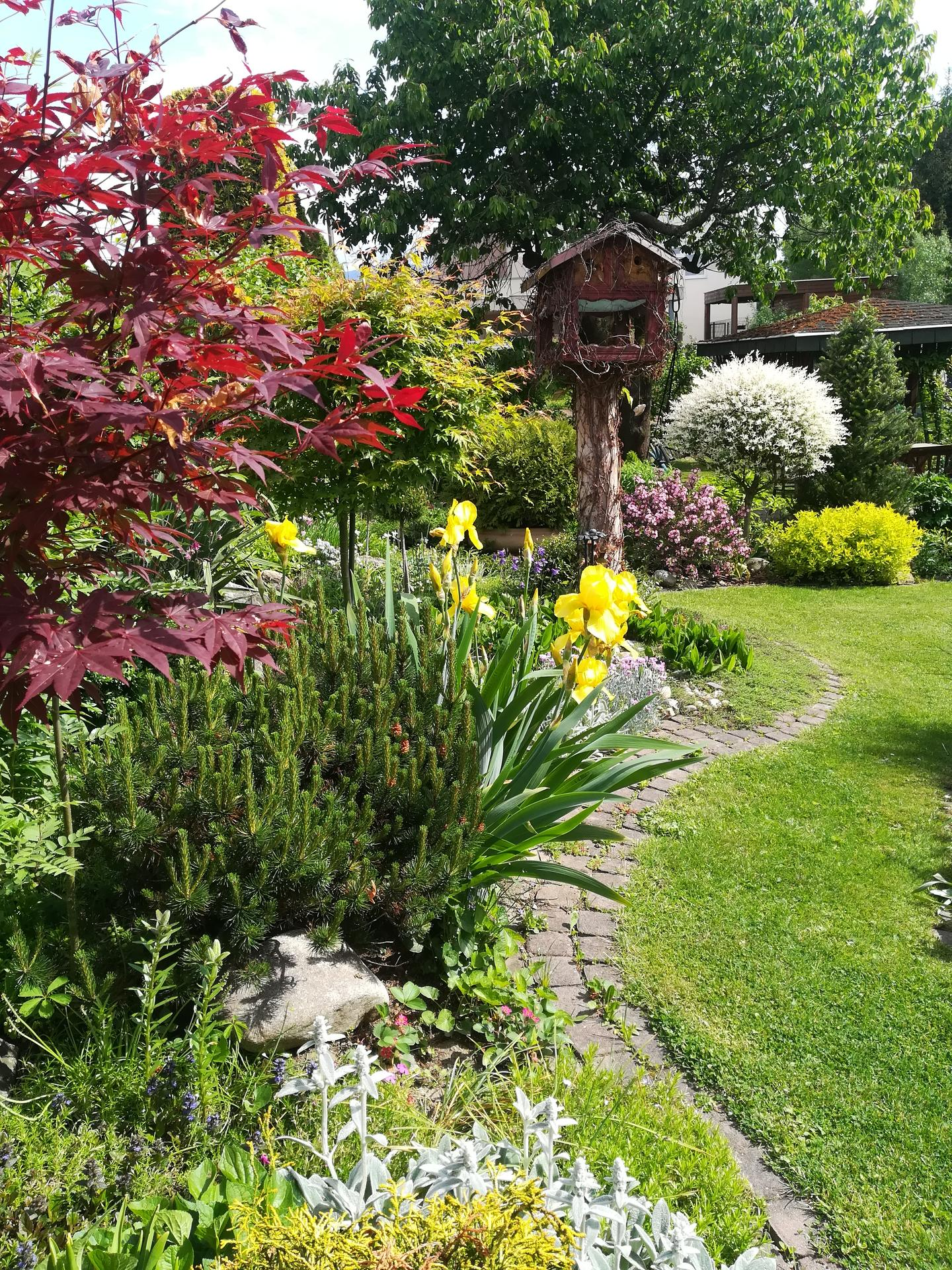 Pozdrav zo záhrady. - Obrázok č. 77