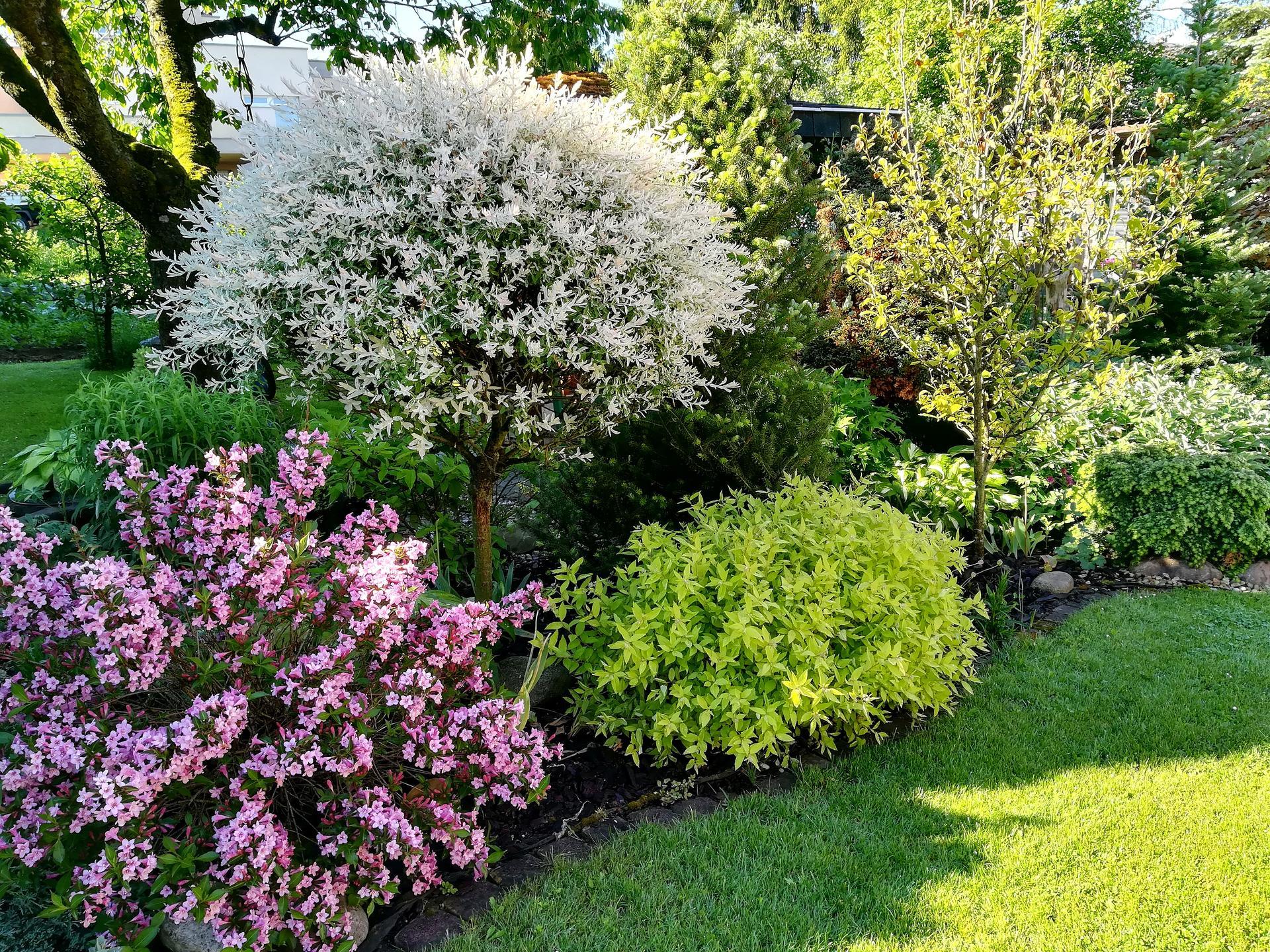 Pozdrav zo záhrady. - Obrázok č. 80