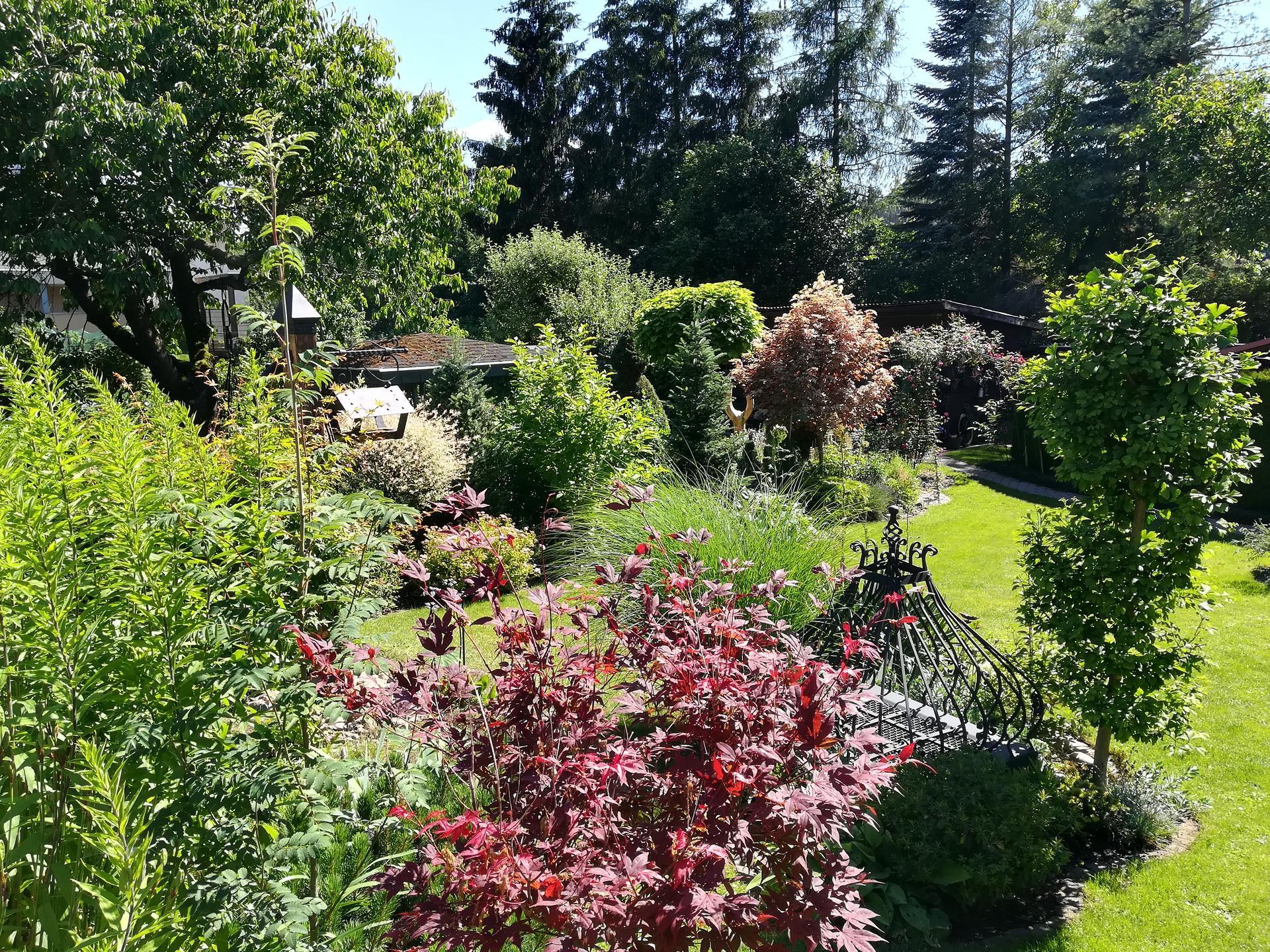 Pozdrav zo záhrady. - Obrázok č. 119