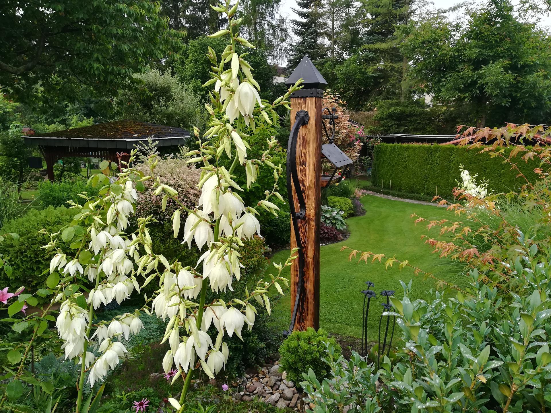 Pozdrav zo záhrady. - Obrázok č. 149