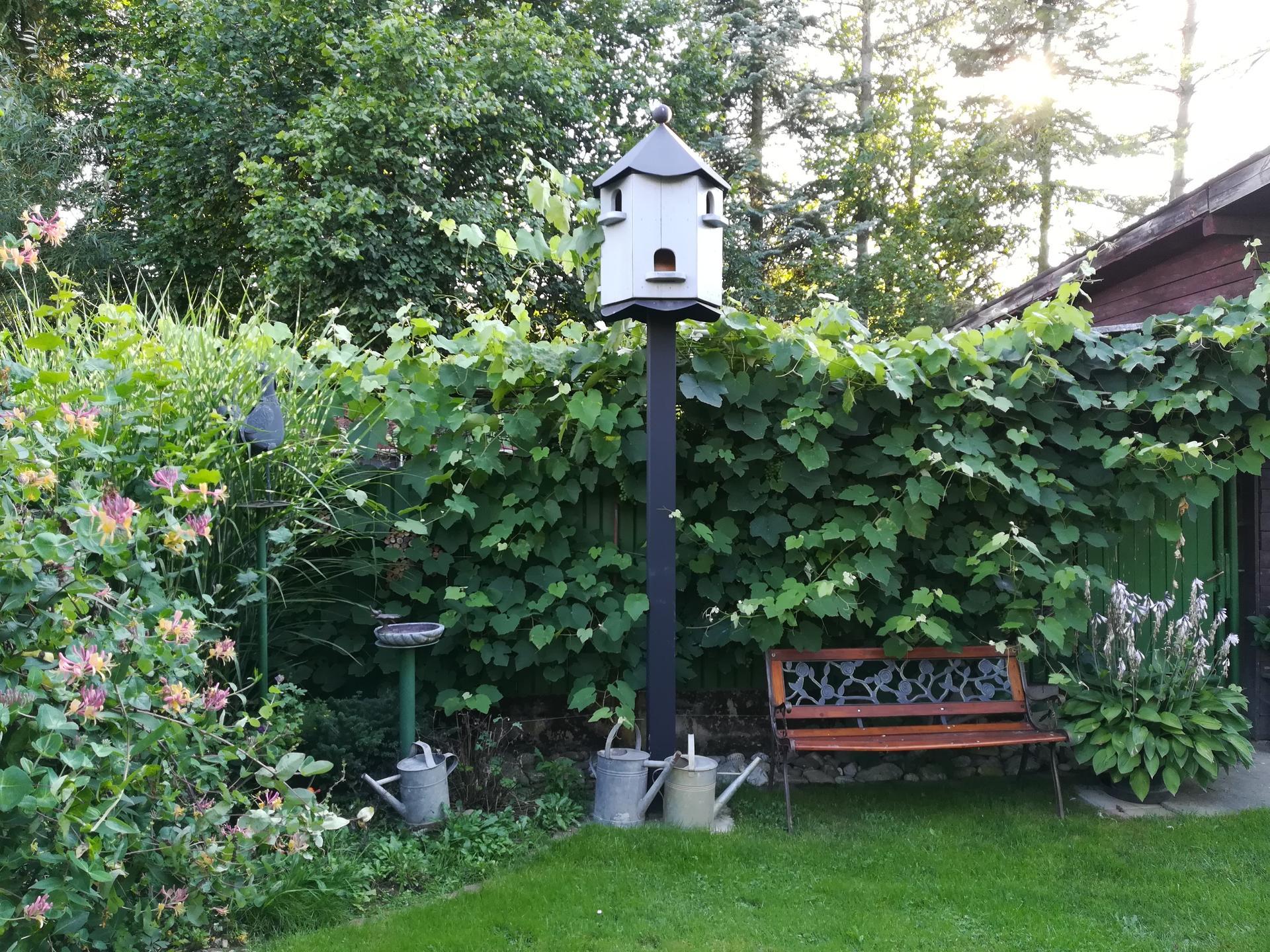 Pozdrav zo záhrady. - Obrázok č. 160