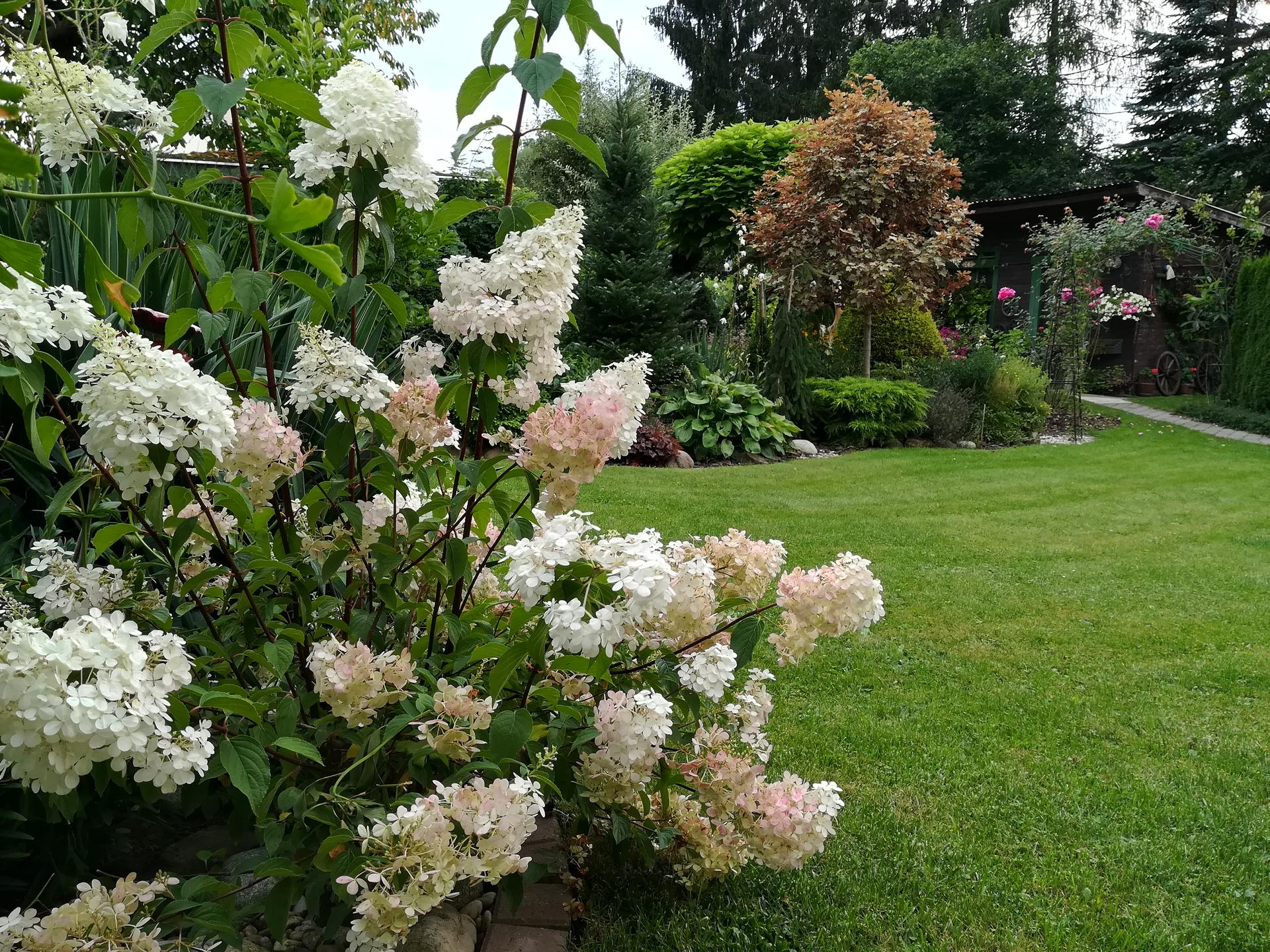 Pozdrav zo záhrady. - Obrázok č. 162
