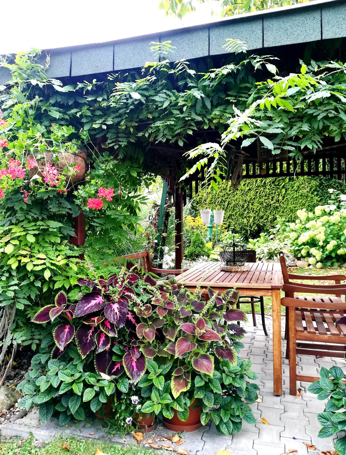 Pozdrav zo záhrady. - Obrázok č. 175