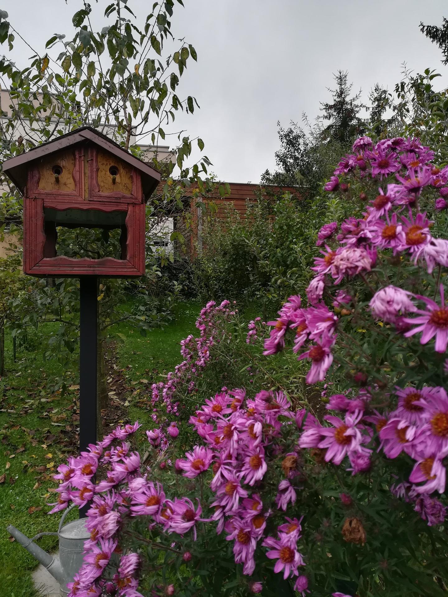 Pozdrav zo záhrady. - Obrázok č. 205