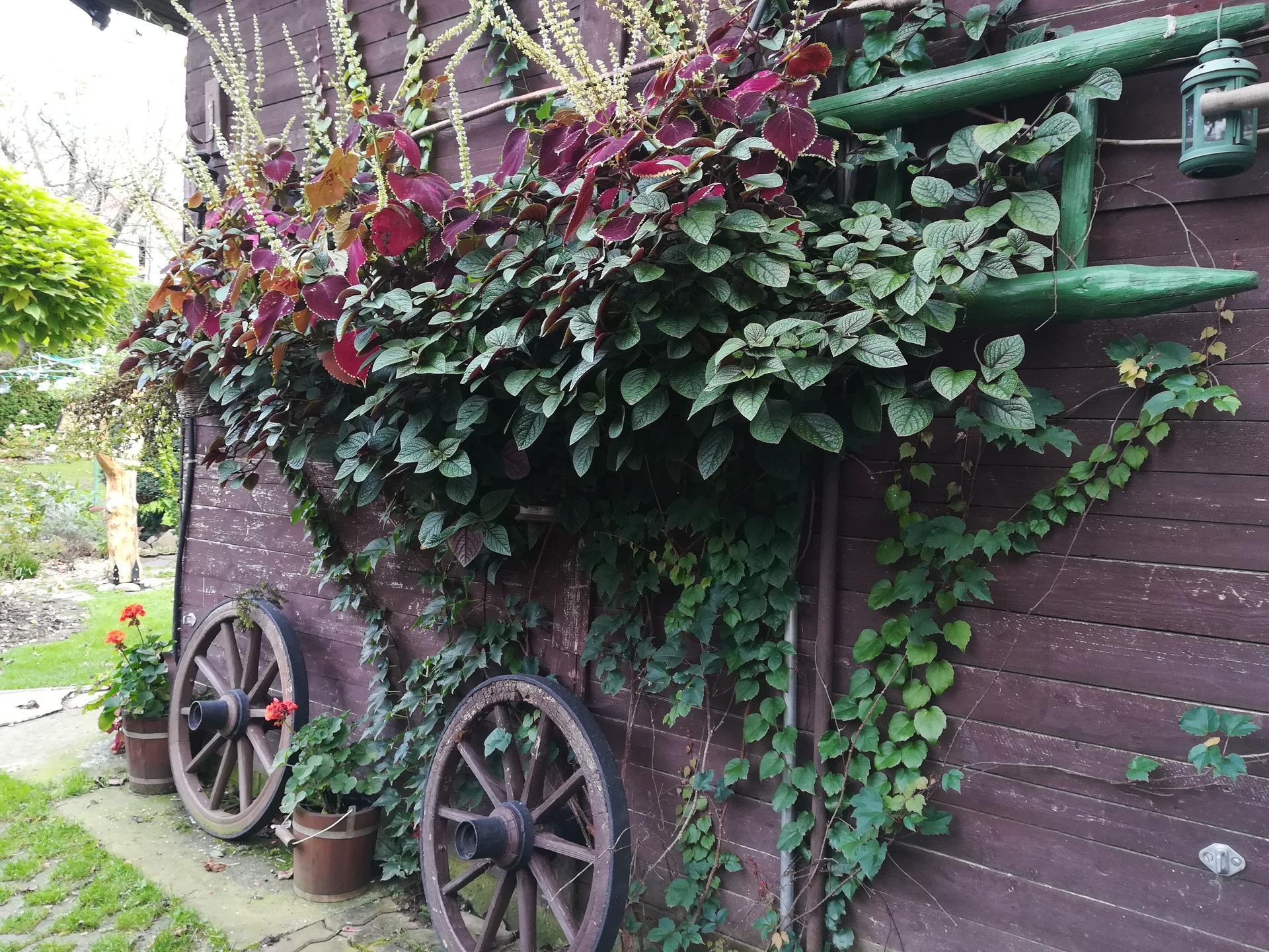 Pozdrav zo záhrady. - Obrázok č. 206