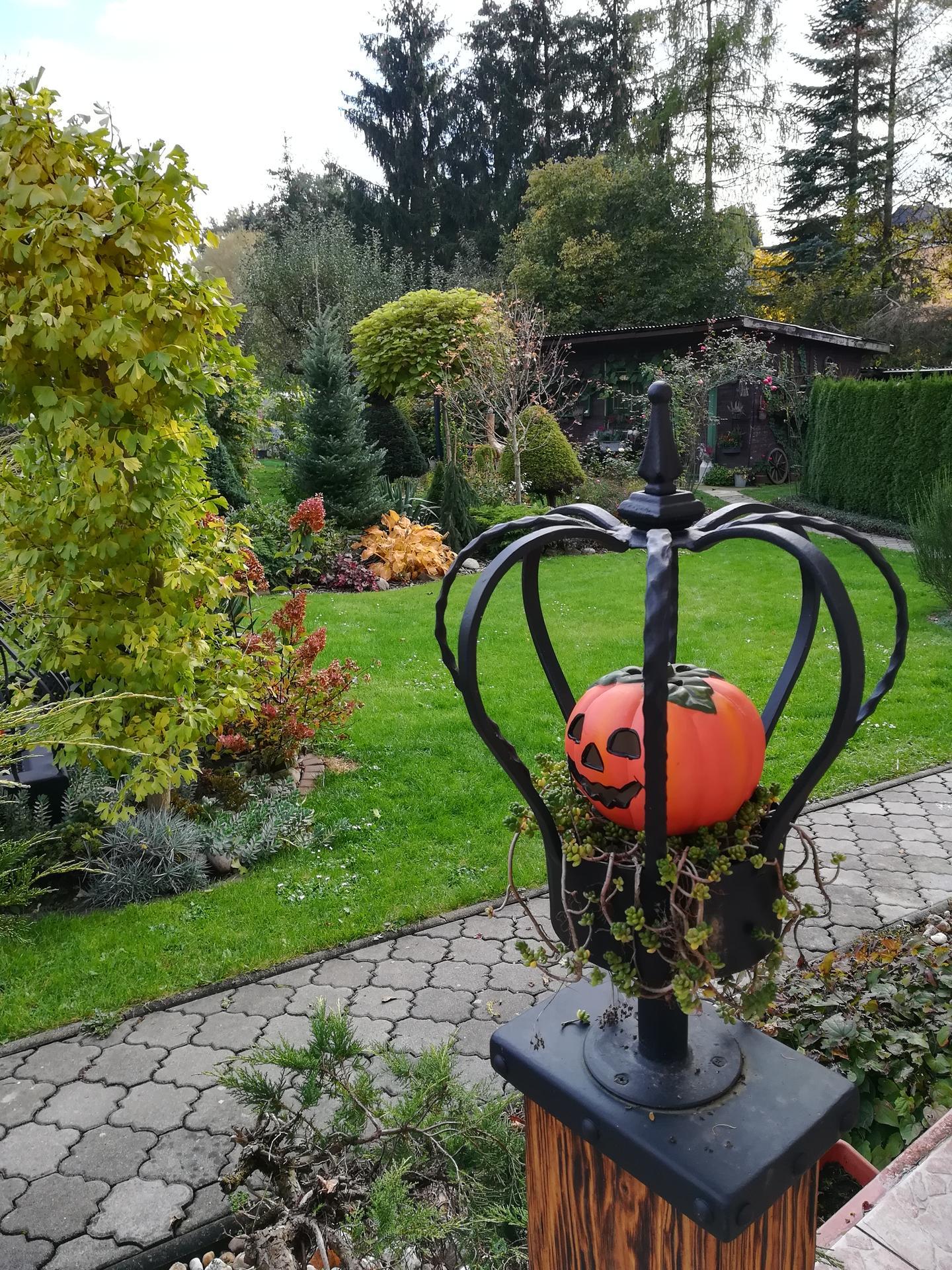 Pozdrav zo záhrady. - Obrázok č. 218