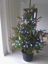 náš tohotoročný stromček, len mu ešte treba zaobstarať nejaký košík, aby som zakryla ten kvetináč :-)