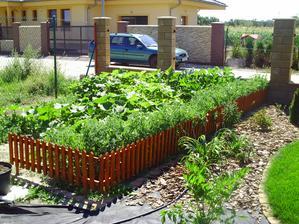 zeleninova zahrada :-) abo dzungla?