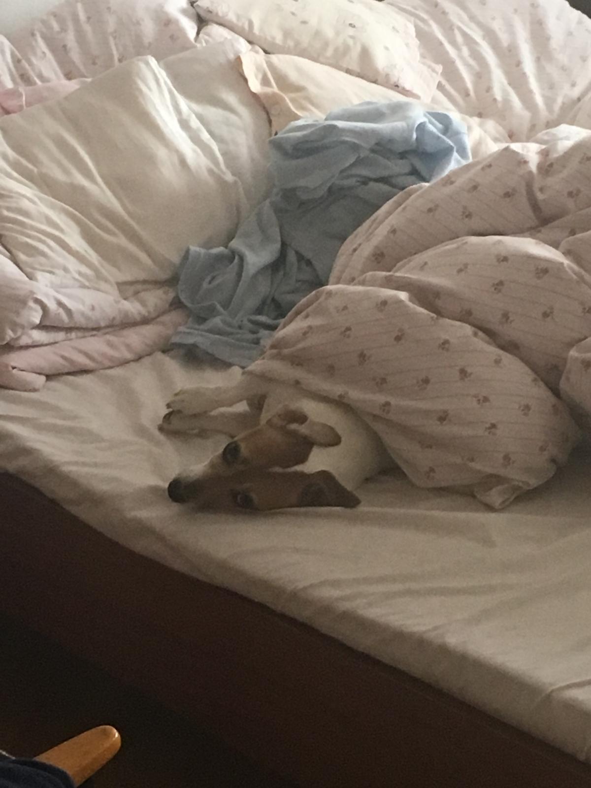 Rekonštuujeme - Psie ráno