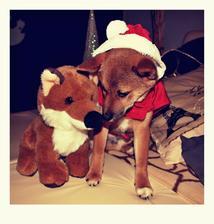 ty jsi můj malý Fox :-)