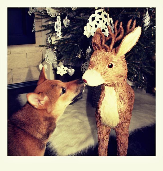 Vánoce 2012 - Obrázek č. 12