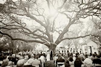 nádherný strom