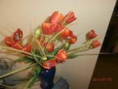 Kytica-tulipány,