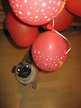 Jeden ze svatebních darů se líbil i našemu psovi - peníze uvnitř balónků