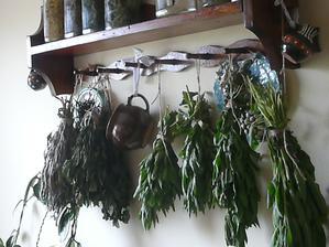 bylinky z našej záhradky