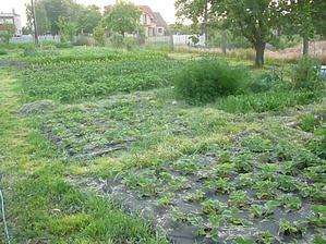 druhá časť záhrady