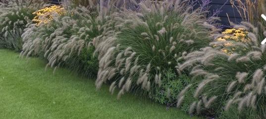 Prosím kde seženu tyhle traviny? Nemáte někdo zkušenost kam je umístit, aby se jim dařilo? Předem děkuji 🥰 - Obrázek č. 1