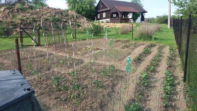 Jsem zvědavá jestli budu mít nějakou úrodu :-D je to moje první zahrádka, tak uvidíme :-D :-)