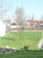 Teraz - uz kvitnu stromy aj kvietky