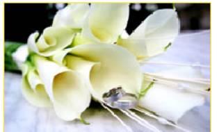Vanilkovo-cokoladova svadba - Najkrajsia, najcistejsia, najnadhernejsia kytica na svete! :-) kvety Calla!! Nie je nic dokonalejsie na svadbu! Nadherny tvar, proste vsetko!