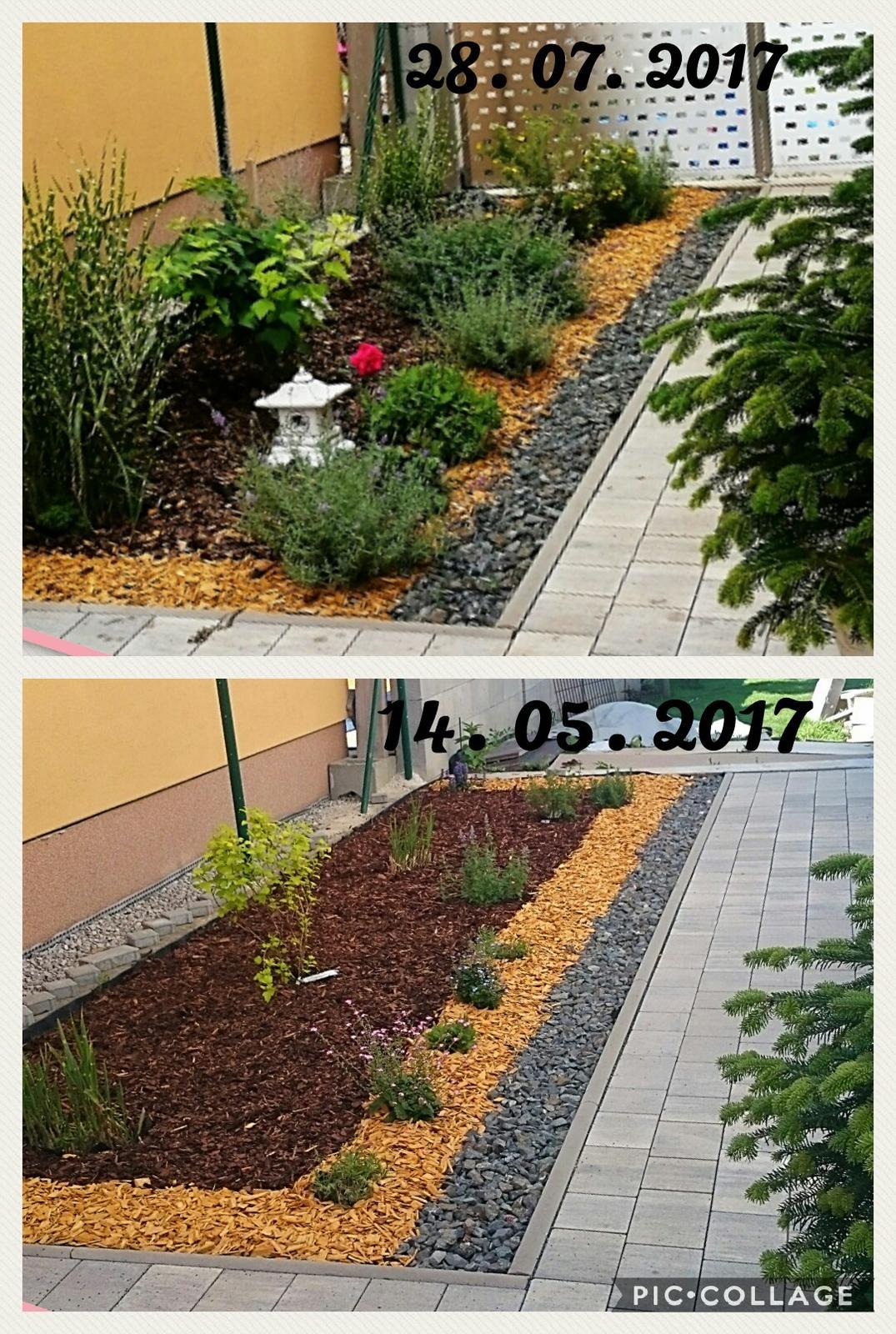 Záhradka - Zahon medzi domami, vysadene levandule, salvia trvaka, kocurik, ruze a travy..  ( kricky dopisem)