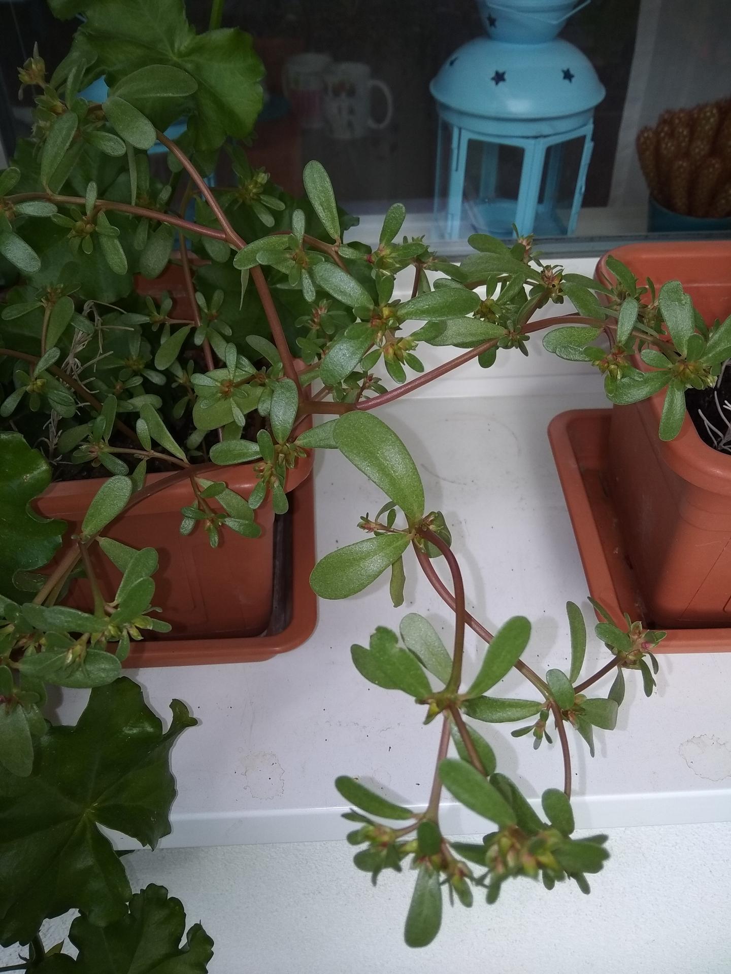 Pekný deň, zasadila som semená... - Obrázok č. 1