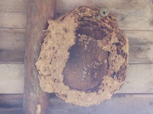 pod podbytkami sme mali osie hnieza