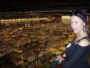 Byli jsme si vybírat kytičky až v Holandsku :-)